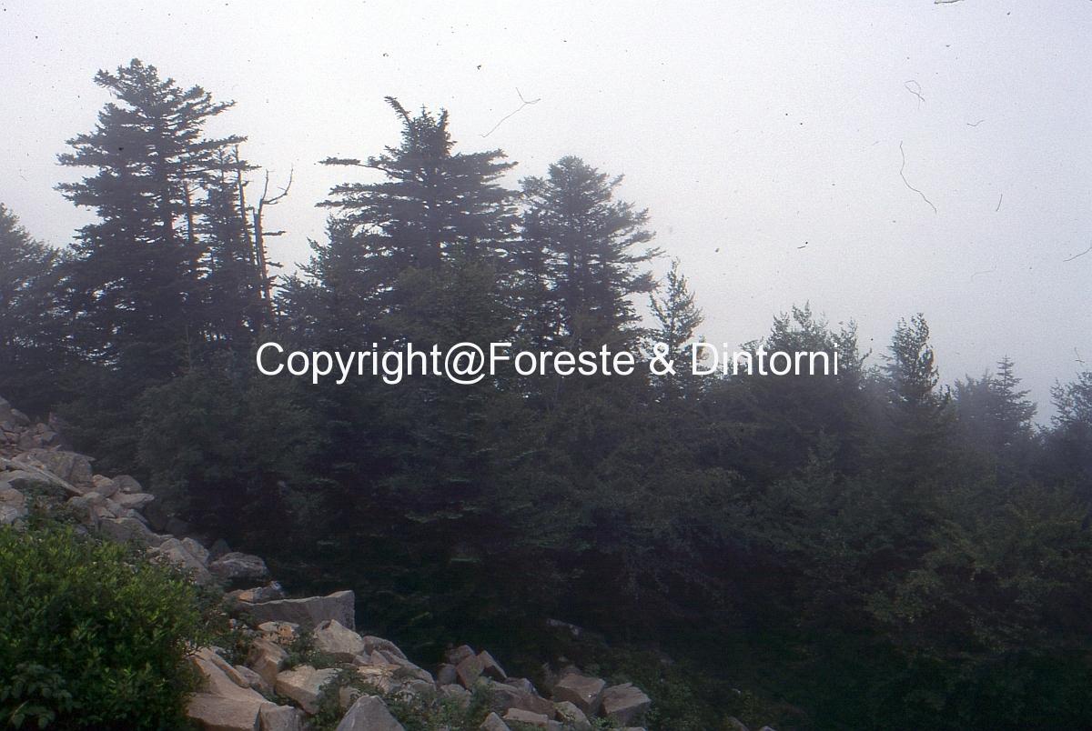 Monte La Nuda