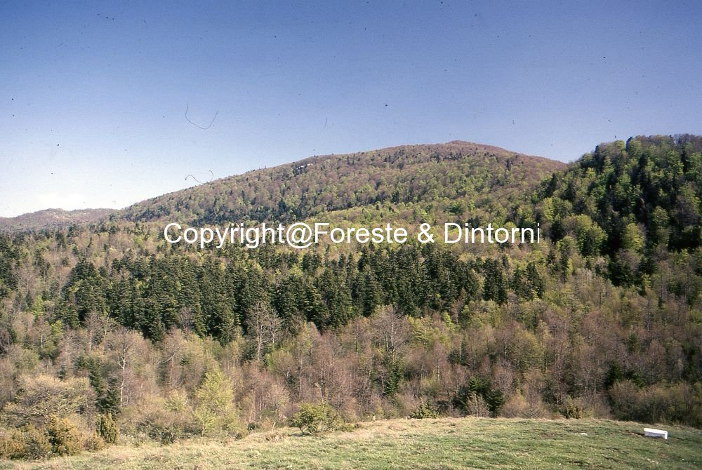 Monte Castelbarone