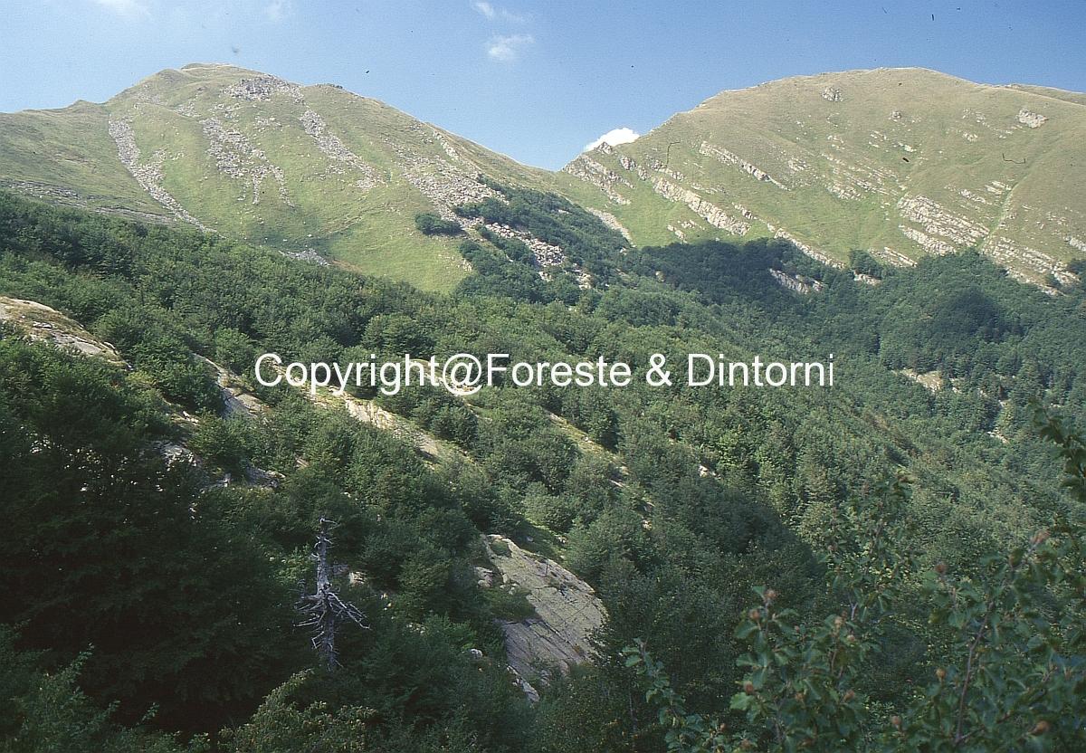 Monte Orsarso
