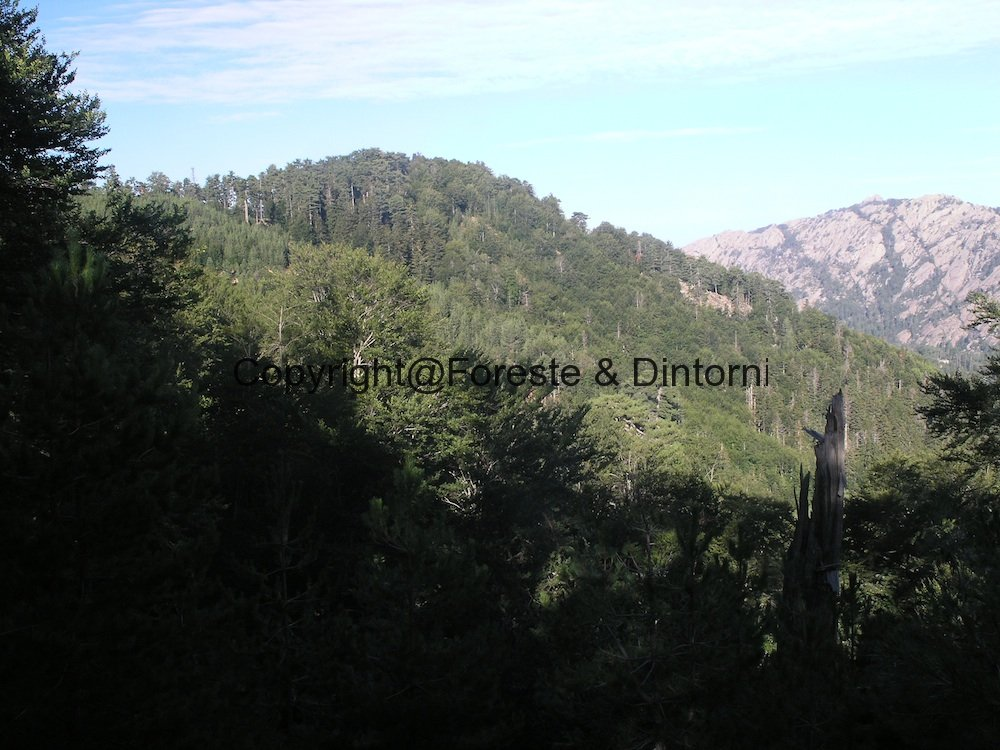 Corsica. Aitone