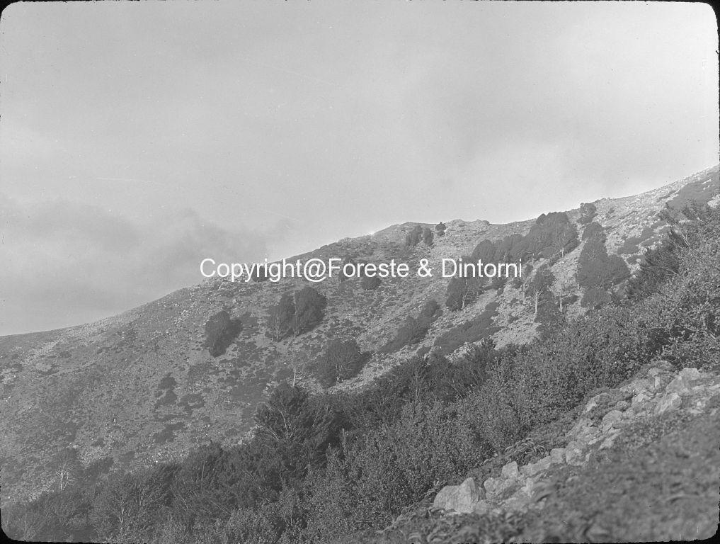 Korsika, Buchen-Windformen im Kampfgürtel, vorne Alnus, südlich Vizzavonapass