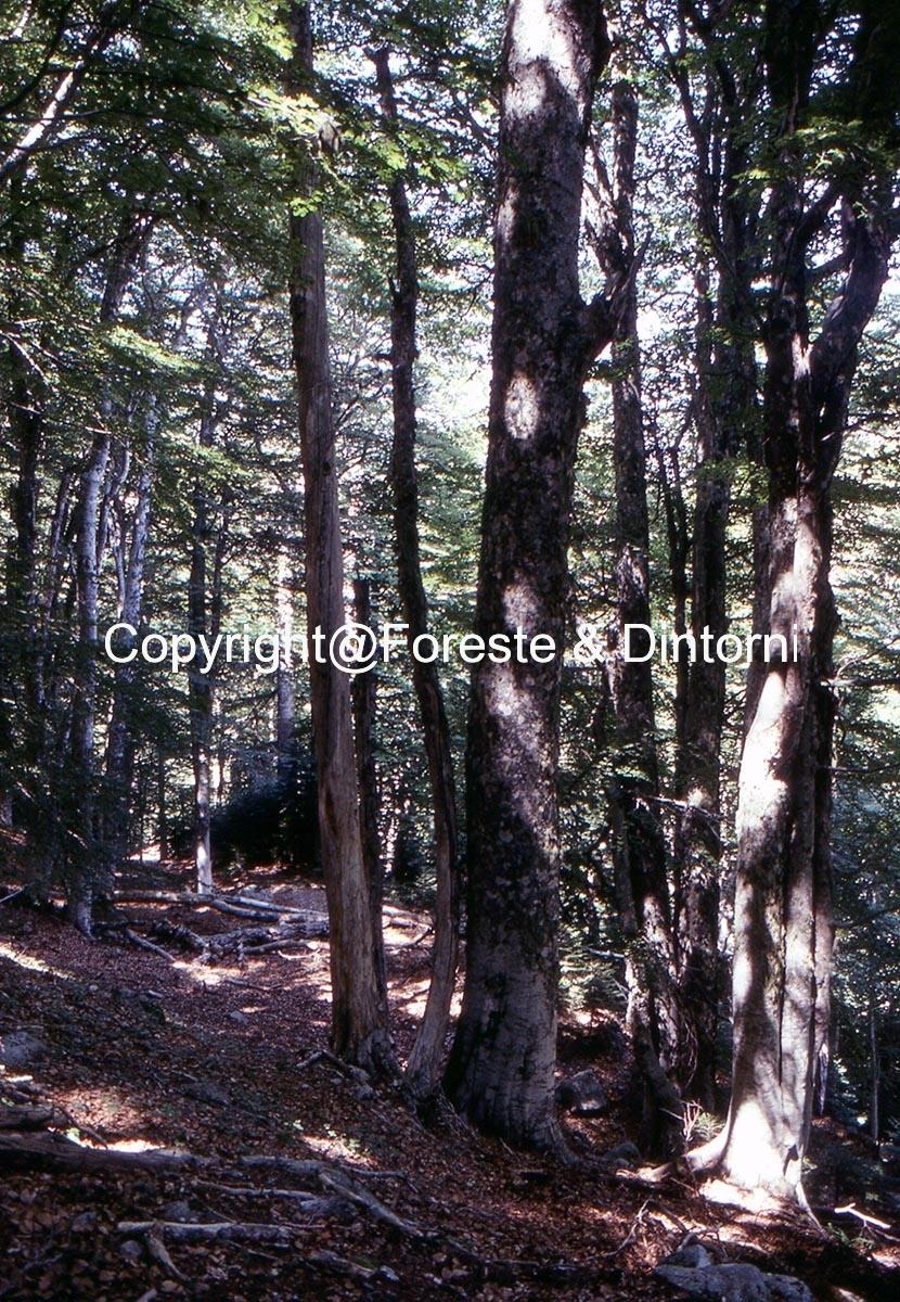 Marmano - Col Verde - Monte Grosso