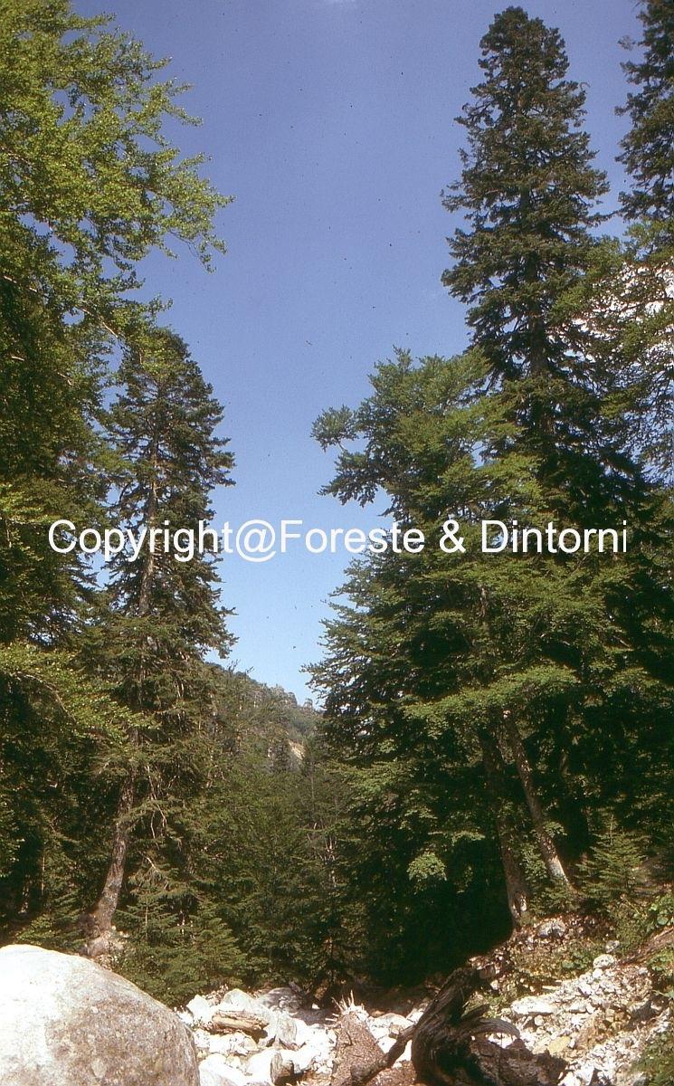 Foresta di Marmano - Col Verde