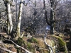 Bosco vetusto Catena della Renga