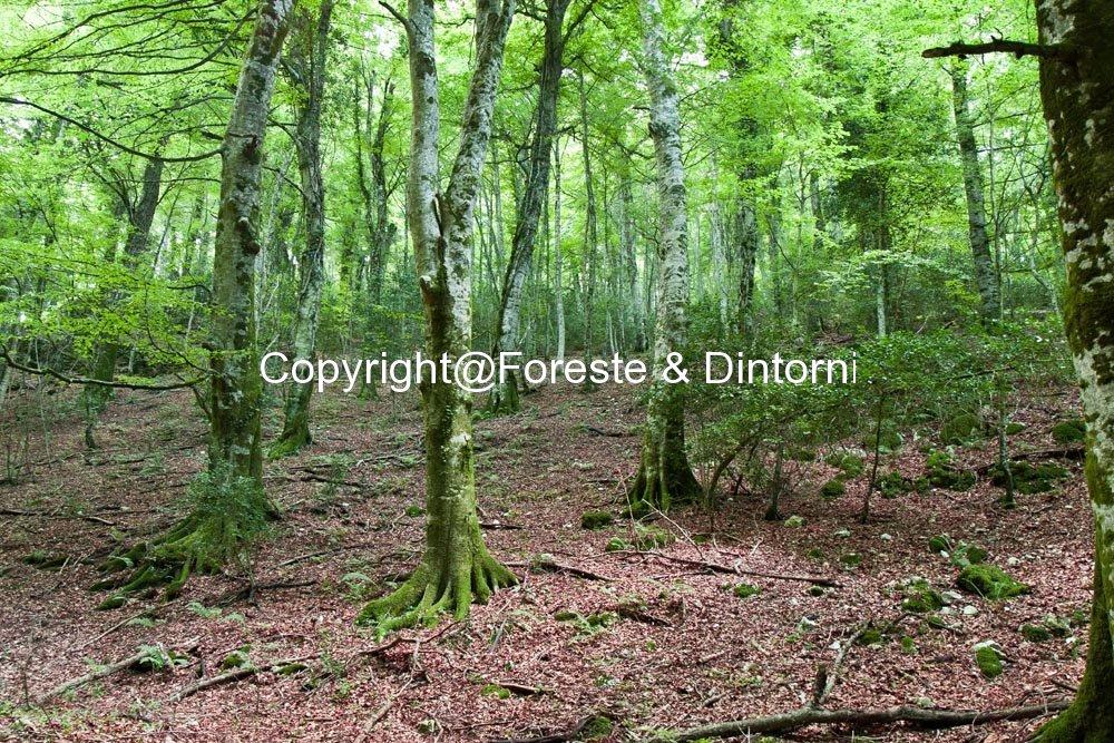 Foresta Umbra Gargano