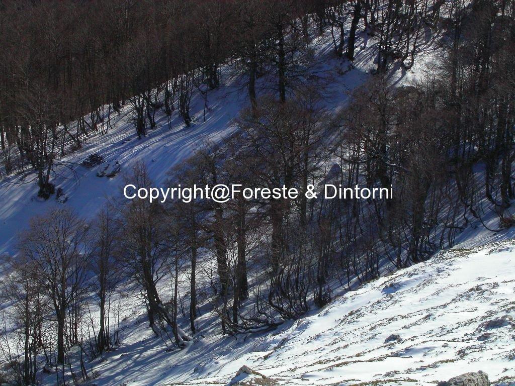 Monte Fanfilli