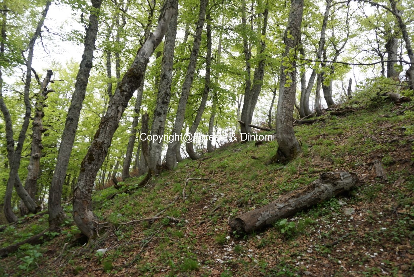 Valle Caprara