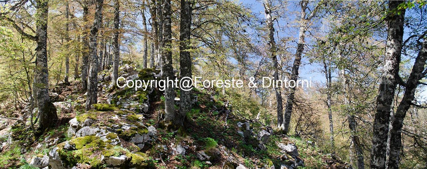 Monte Fontecchia