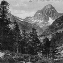 Abies alba Pyrenees